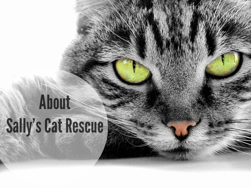 about-sallys-cat-rescue