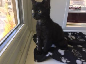 bob-the-kitten-needs-adopting
