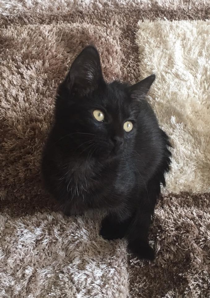 lottie-sallys-cat-rescue