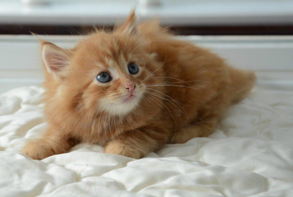 artie-sallys-cat-rescue