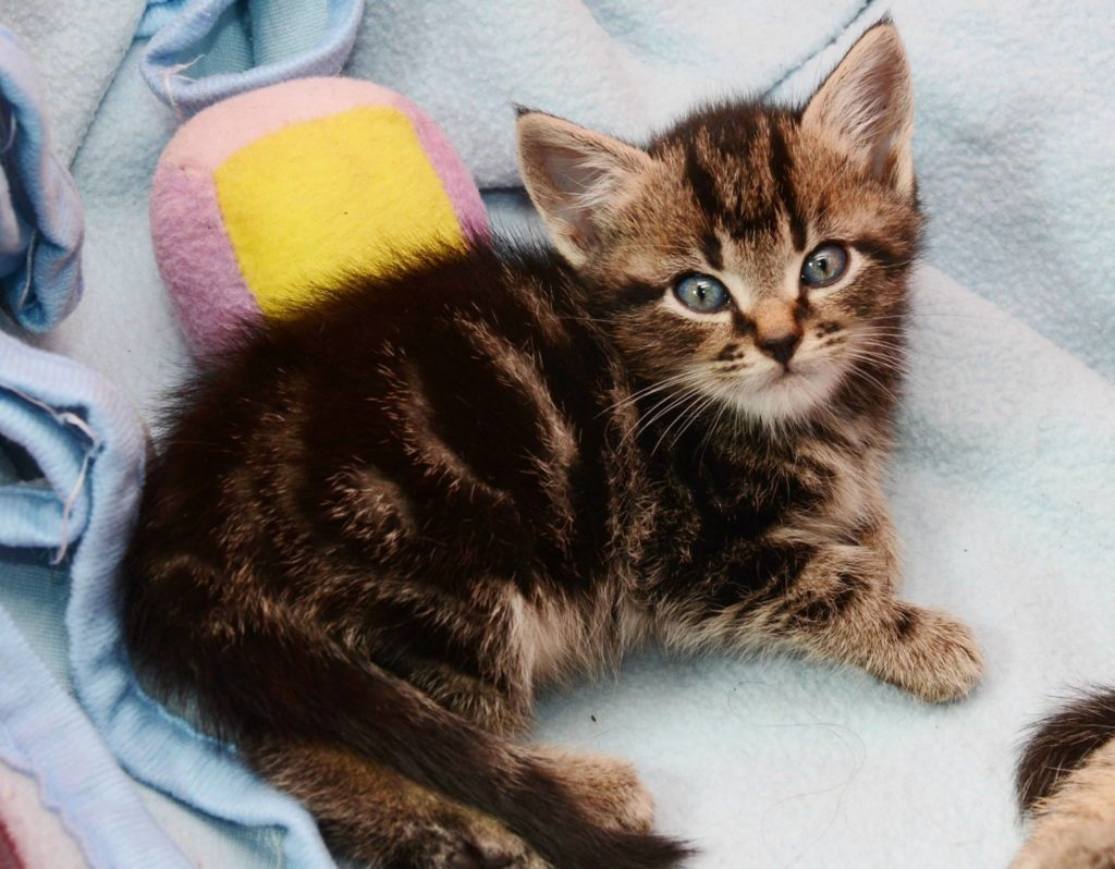 riley-sallys-cat-rescue