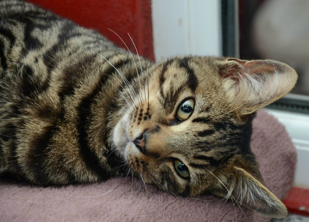 chester-sallys-cat-rescue-cornwall