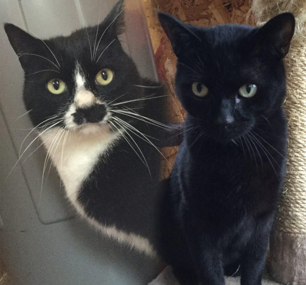 sid-and-freddie-sallys-cat-rescue-cornwall
