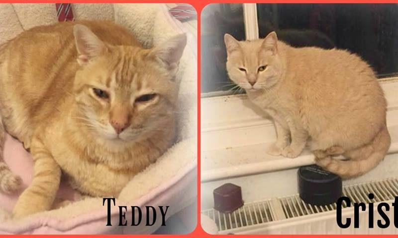 Crista & Teddy