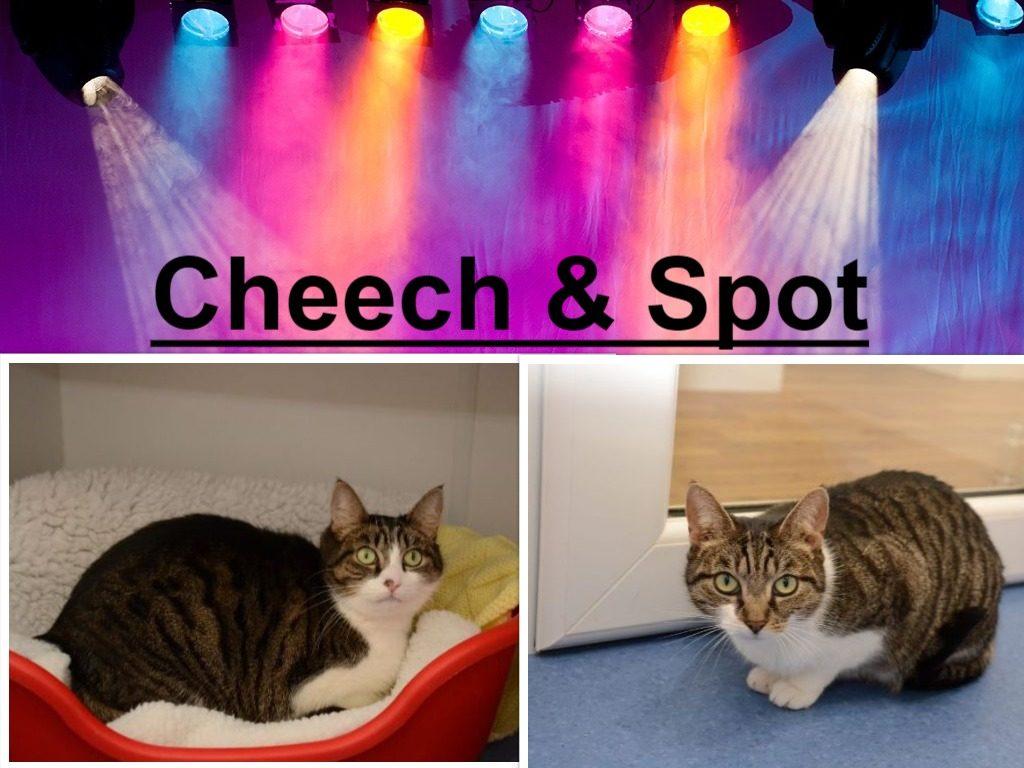 Cheech & Spot
